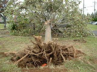 台風15号による倒木